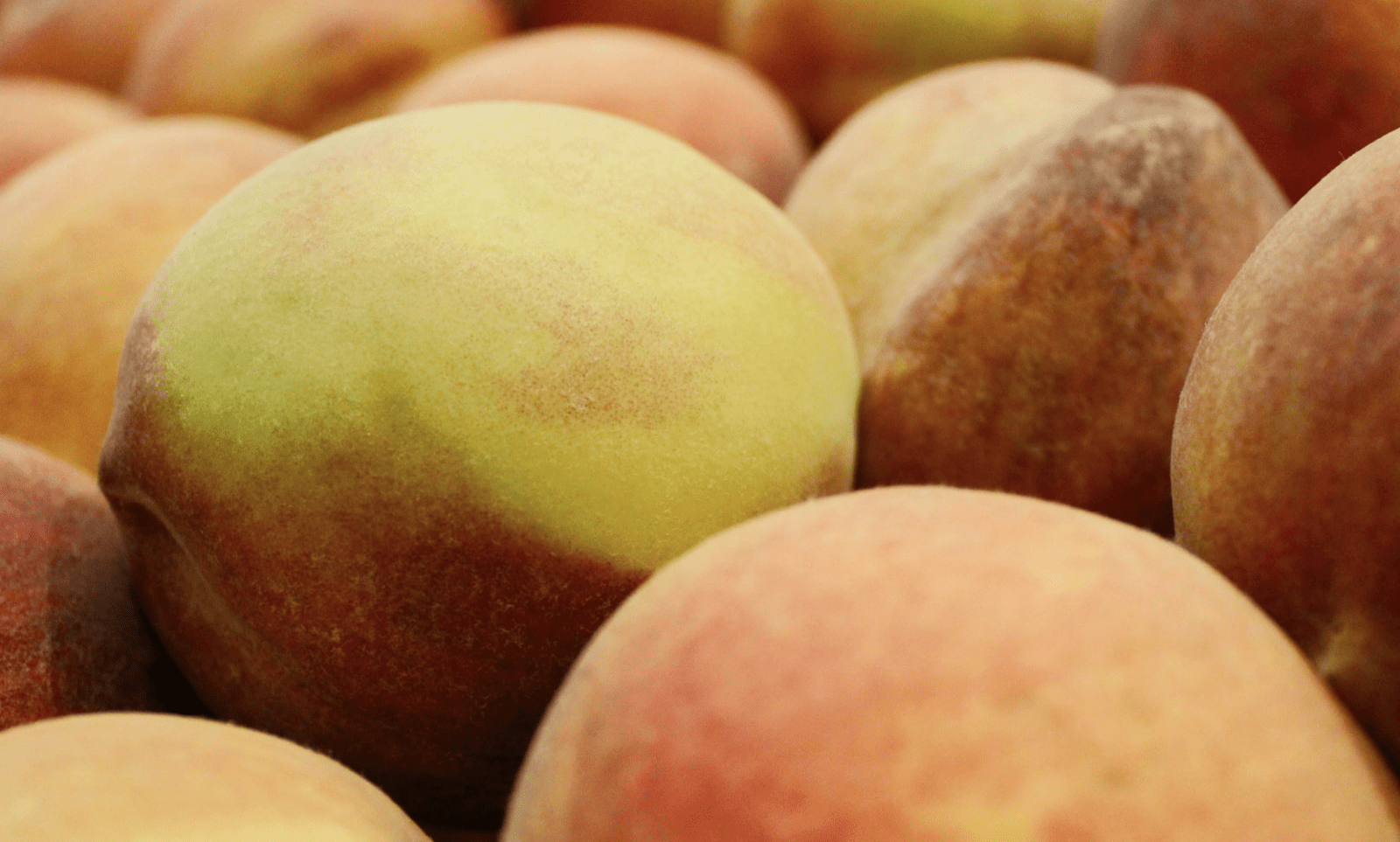 Peaches Recalled Following Salmonella Outbreak